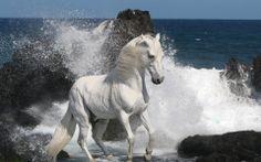 Beautiful White Horse Waves Wallpaper Horse Wallpaper Beach Wallpaper Beautiful Wallpaper Wallpaper