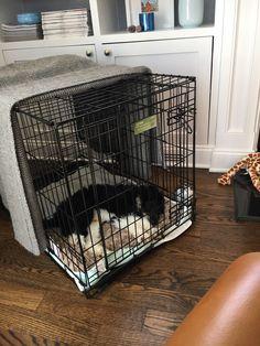 Kennel Training A Puppy, Puppy Kennel, Training Your Puppy, Litter Training Dogs, Dog Crate Training, Puppy Playpen, New Puppy Checklist, Puppy Schedule, Puppy Training Schedule