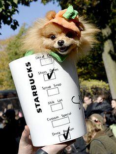 pumpkin spice latte pup.
