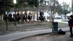 Police horse doing the electric slide at Mobile Mardi Gras, via YouTube.