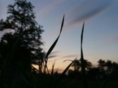Sunset #mood