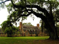 Richmond Plantation 2008 - Berkeley County, South Carolina