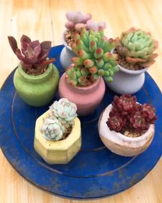 Terrarium plants · outdoor plants · succulents in containers, cacti and succulents, growing succulents, succulent pots, planting succulents Propagating Succulents, Growing Succulents, Succulents In Containers, Cacti And Succulents, Planting Succulents, Succulent Care, Succulent Gardening, Succulent Terrarium, Garden Plants