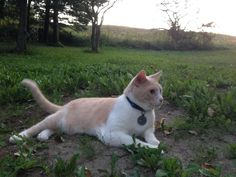 Lost Cat - Tabby - New Tecumseth, ON, Canada L0G 1W0