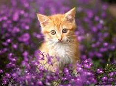 cats and kittens pictures - Google Search
