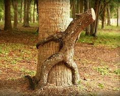 pictures of nature tree hugging - Bing images Bonsai, Inter Video, Photo Halloween, Weird Trees, Dame Nature, Tree People, Tree Faces, Tree Carving, Old Trees