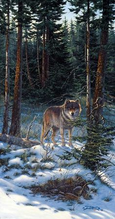 Wolf, by Derk Hansen -Winter Hunter-. a lone wolf prowls for his next meal. Since wolves are seldom solitary, there is probably a pack in the vicinity doing the same thing. Wolf Photos, Wolf Pictures, Wolf Spirit, My Spirit Animal, Beautiful Creatures, Animals Beautiful, Malamute, Indian Wolf, Wolf Painting
