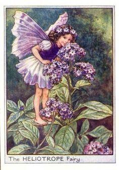 Heliotrope Flower Fairy Print c.1950 Fairies by Cicely Mary Barker