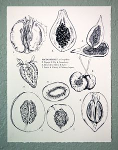 Vagina Fruits Drawing 8x10 by JunebugandDarlin on Etsy