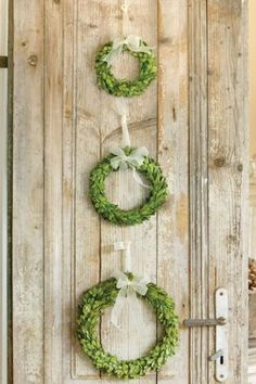 "There is something sparse and lovely about this trio of preserved boxwood wreaths. I would remove the ivory chiffon and go for rich red grosgrain, maybe even wire in a few red glass balls. You could use the smaller wreaths for candle rings around the base of thick ivory pillars. Fifty for three, 21"", 16"", 11.5""."