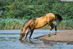 http://equine-photo.net/freehorses/teke/