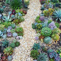 Windowsill garden - imagine a path full of succulents!, Windowsill garden - imagine a path full of succulents! - Windowsill garden – imagine a path full of succulents!