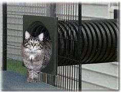 Walk-in SunCATcher Cat Cages, Cat Condos, Outdoor Cat Enclosures Tap the link Now - All Things Cats! - Treat Yourself and Your CAT! Stand Out in a Crowded World! Cage Chat, Cat Habitat, Outdoor Cat Enclosure, Reptile Enclosure, Cat Cages, Bird Cages, Cat Playground, Outdoor Playground, Outdoor Cats