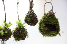 Moss and birdcage