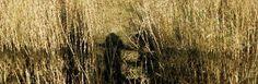 Frans Jonker - Een schaduw van waar we waren