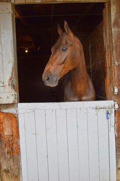 King Coconut. He is a very handsome Saddlebred horse. Just beautiful.
