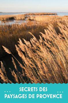 Quand voir la lavande ? Les champs de coquelicots ? Les vignes d'automne ? Découvrez les secrets des paysages de Provence Champs, Movie Posters, Photos, Grape Vines, Poppies, Lavender, Pictures, Film Poster, Billboard