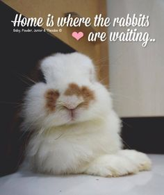 ❤ I may be the crazy bunny lady but this is so true - BUNNEZ 4 LIFE!