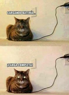 Favor de quitar el cargador antes de que lo muerda. Repinned by http://www.Basic-Spanish-Words.com/ Funny Animal Sayings, Funny Cat Quotes, Hilarious Animal Memes, Cat Sayings, That's Hilarious, Funny Pics, Videos Funny, Funny Animal Comics, Funny Animal Pictures