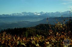Üetliberg view into the Swiss alps covered with the first snow #zurichspots #swissspots
