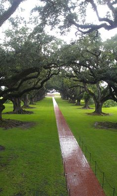 Oak Alley Plantation in Vacherie, Louisiana. Most gorgeous site ever! Would love to go back