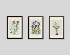 Any 3 Botanical Prints, Set of 3, Antique Botanical, Botanical Print Set, Set of Prints, Cottage Decor, Victorian, Lithograph, Wildflower