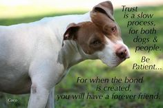 Please remember when you adopt..It takes a very long time and a lot of love, patience and work to form that bond..