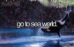 bucket list avant de mourir go to sea world - bucketlist Orcas, Stuff To Do, Things To Do, Girly Things, Bucket List Before I Die, Life List, Summer Bucket Lists, Bucket List Life, Sea World
