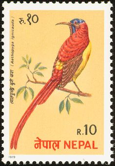 Fire-tailed Sunbird stamps - mainly images - gallery format