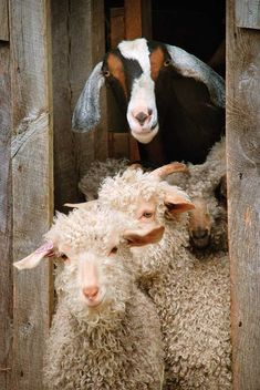 The Ins and Outs of Yarn   Farming