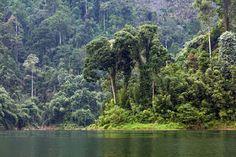 """""""Khao Lak"""" Thailand: """"Khao Sok National Park"""" Provinz Surat Thani, Süd ..."""