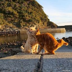Pretty Cats, Beautiful Cats, Baby Cats, Cats And Kittens, Cats Meowing, I Love Cats, Cute Cats, Sweet Cat, Photo Chat