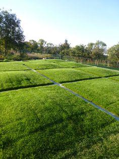 eva wagnerová / private garden, zahrada sadová