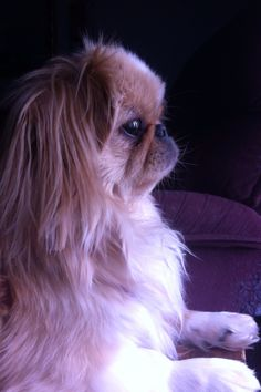 Sophie 2 yrs old Cute Baby Puppies, Baby Dogs, Cute Dogs, Dogs And Puppies, Animals And Pets, Baby Animals, Cute Animals, Funny Animal Photos, Animal Pictures