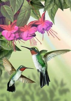 """Fuchsia and Hummingbirds, vertical - Thomas Wood Images Colibri, Art Colibri, Hummingbird Painting, Hummingbird Wallpaper, Hummingbird Pictures, Leaf Animals, Photo Vintage, Kinds Of Birds, Cross Stitch Art"