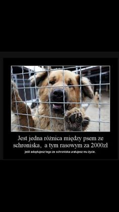 Jaka jest różnica pomiędzy psem ze schroniska, a psem rasowym za 2000 pln? Save Life, Big Dogs, True Stories, Pet Adoption, Life Lessons, Humor, Funny, Cute, Pictures
