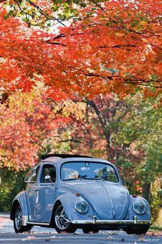 - - (notitle) vw bug bus and ✌️ ☮ ☯ ☸ ☸✌️ ☮ ☯ Beetles Volkswagen, Volkswagen Bus, Vw T1, Vw Camper, My Dream Car, Dream Cars, Jetta Vw, Carros Retro, Kdf Wagen