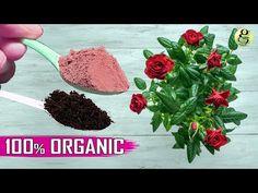 Home Made Fertilizer, Fertilizer For Plants, Organic Liquid Fertilizer, Organic Soil, Top Soil, Plant Growth, Bonsai, Gardening Tips, Planting Flowers