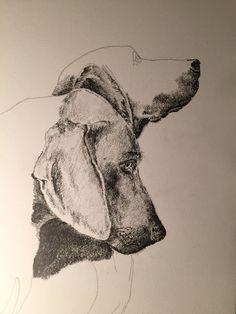 Perros dibujo ilustracion grafito Quiltros
