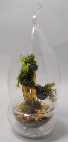 Glass Sculpture Terrarium by Sean Clayton