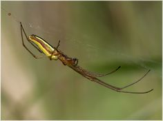 Small spider in grass (unknown) | Flickr - Photo Sharing!