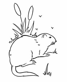 free printable skunk coloring pages for kids pinterest printable