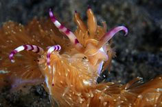 Nudibranch:  French Kiss by Eugene Lim on 500px