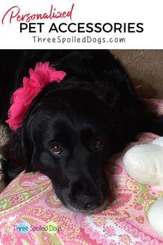 Wood Dog Bed, Diy Dog Bed, Dog Mom Gifts, Dog Lover Gifts, Dog Lovers, Raised Dog Beds, Personalized Dog Beds, Custom Dog Beds, Designer Dog Beds