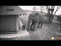 A Hidden Camera Catches An Elephant Doing Something Scientists Have Never Seen Before | World Truth.TV