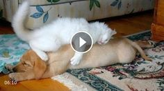 Cute animals waking each other up – Funny animal compilation