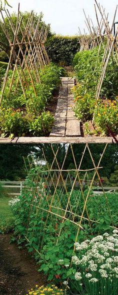 Bamboo pole trellis #gardenideas #gardening #backyard