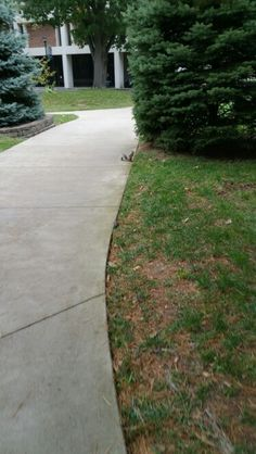 There are squirrels EVERYWHERE