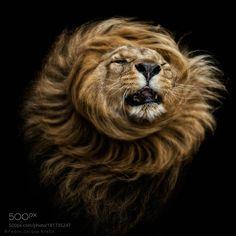 Shaking up by pjkrebs #animals #animal #pet #pets #animales #animallovers #photooftheday #amazing #picoftheday