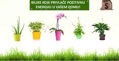 Biljke su veoma važan izvor energije u svačijem domu. Za gajenje biljaka potrebno je imati mnogo ljubavi i vremena. One zahtevaju da budu…